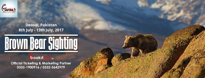 brown bear/ wildlife sighting tour