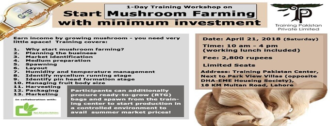 Start Mushroom Farming with minimum investment - 1-day