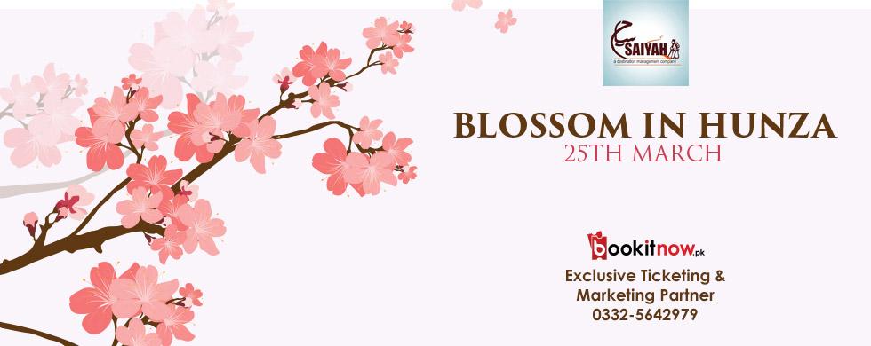 blossom in hunza
