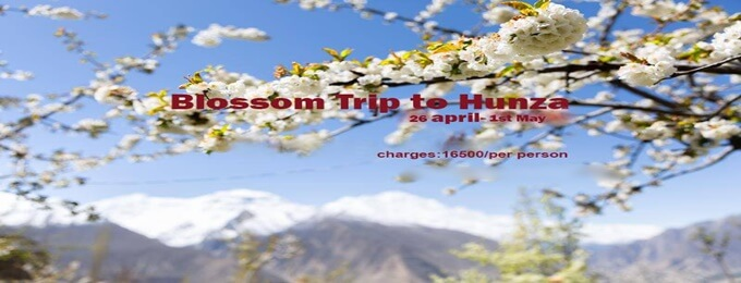 blossom trip to hunza