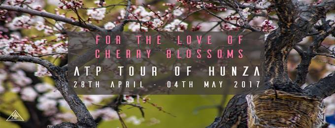 cherry blossom   trip to hunza valley 28 april - 4th may, 2017
